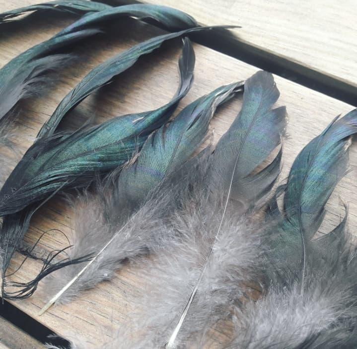 Plumes naturelles d'oiseaux sans maltraitance sans cruauté