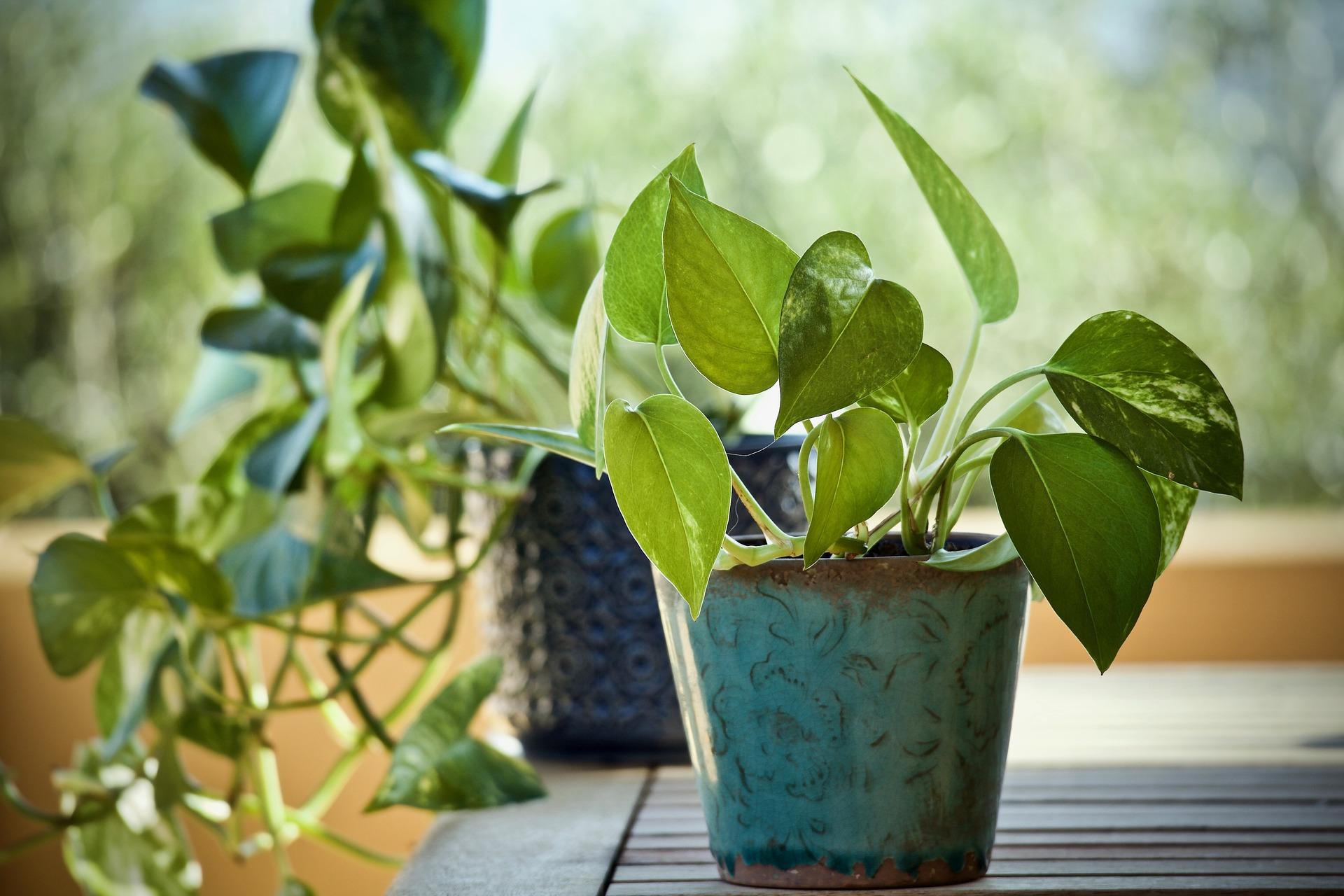 Plante d'intérieur pour suspension macramé DIY tuto